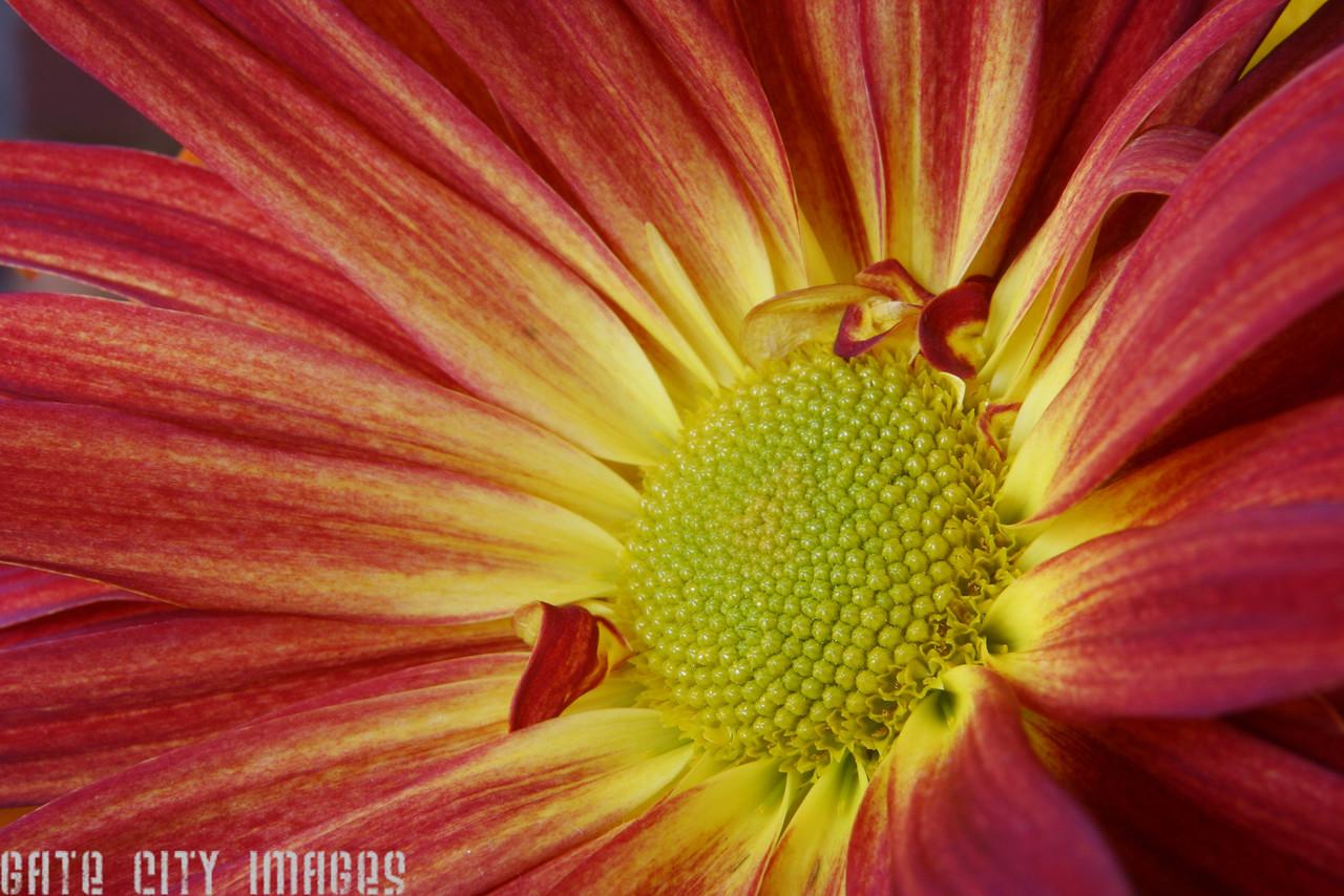 IMG_9712 Flower dpp