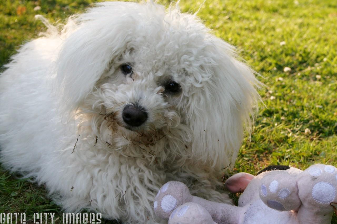 IMG_5074 Morag dog edited