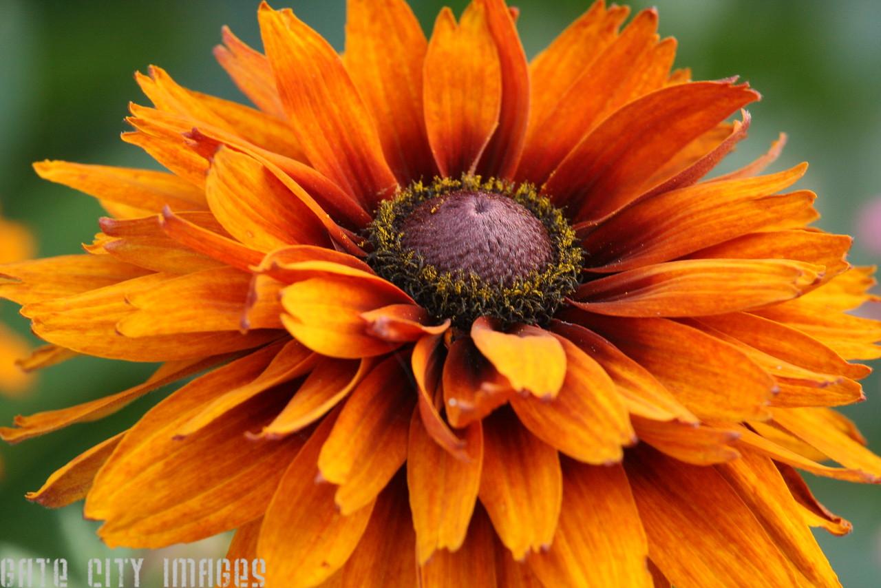 IMG4_19901 flower