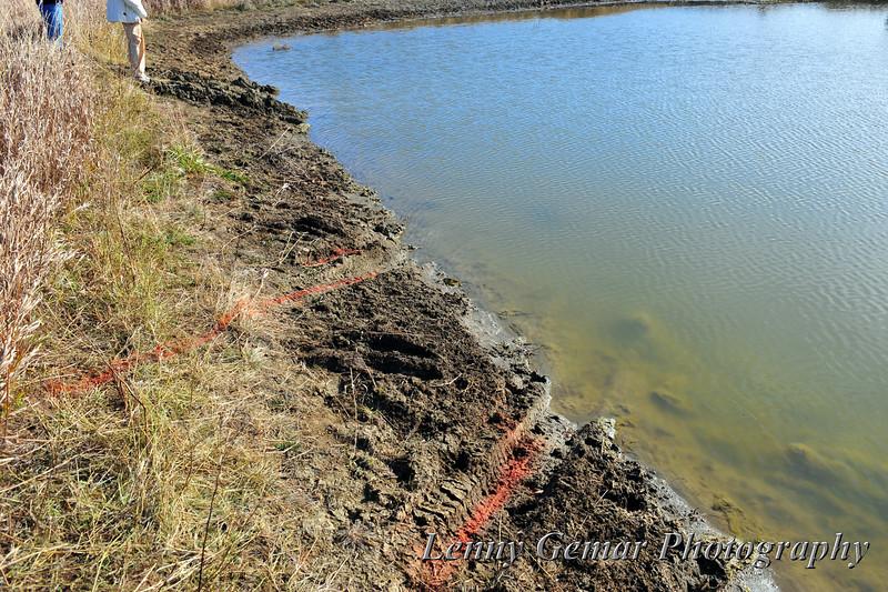 Tracks into the pond.