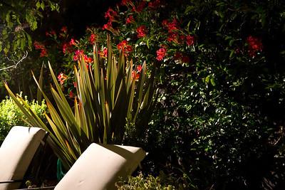 Night flowers 2517
