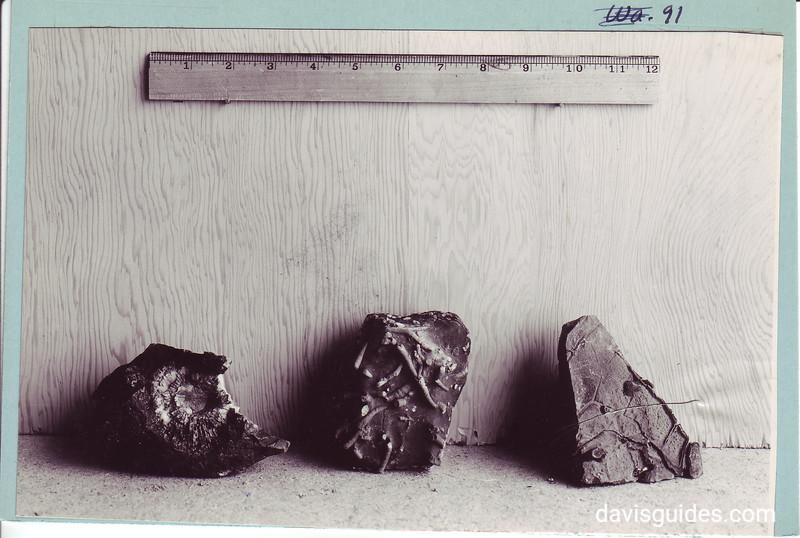 Fossils found in Death Valley region, Death Valley National Park, 1935.