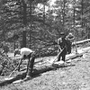 CCC men carrying out pest control work in the Cow Creek Valley. Rocky Mountain National Park, 1933.