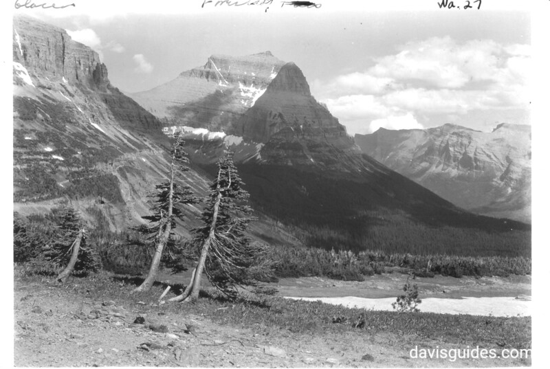 Windblown trees at timberline, summit of Logan Pass. View is toward St. Marys. Glacier National Park, 1932.