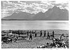 CCC enrollees clearing debris from shores of Jackson Lake, Grand Teton National Park, 1933.