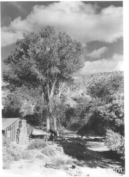 An old miner's cabin at Cottonwood Springs. Joshua Tree National Park, 1936.