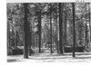 Manzanita Lake Lodge area. View over the bridge toward the main building. Lassen Volcanic National Park, no date.