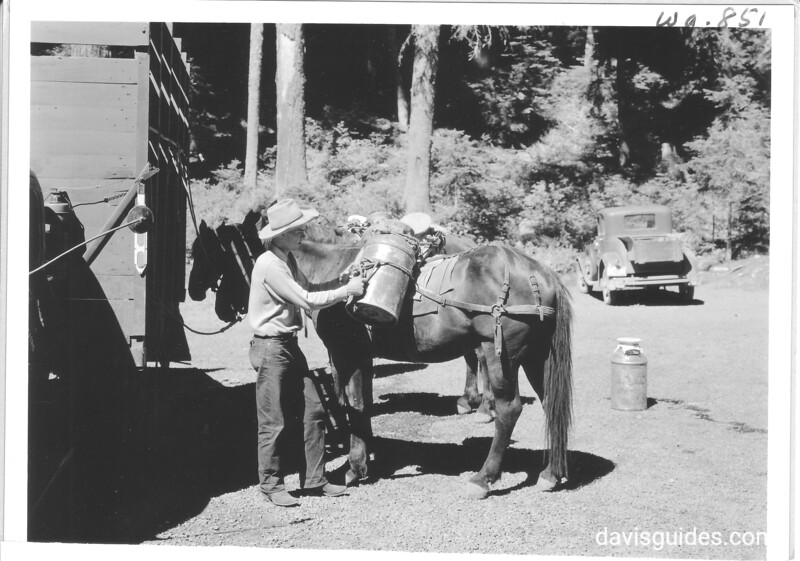 Can of fish being packed on horse for planning in Lake George. Mount Rainier National Park, 1941.