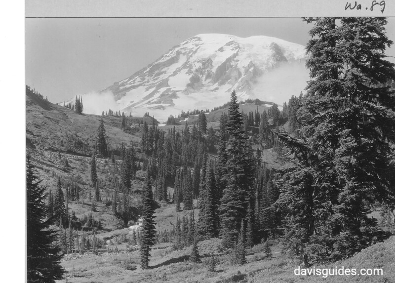 Alpine fir and Mount Rainier from Paradise Valley.  Mount Rainier National Park, 1932.