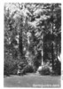 Picnic area in upper part of Muir Woods. Muir Woods National Monument, 1936.
