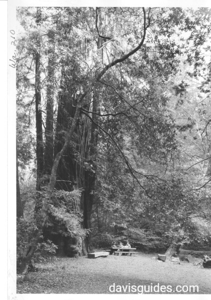 Picnickers at table under redwood trees. Muir Woods National Monument, 1941.