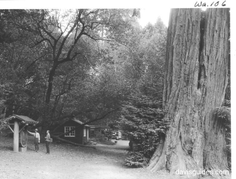 Administration Building, Montgomery Concession with tree section being shown to visitor by park ranger. Muir Woods National Monument, 1936.
