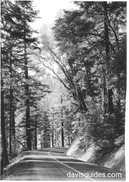 Trees along the entrance highway. Oregon Caves National Monument, 1941.