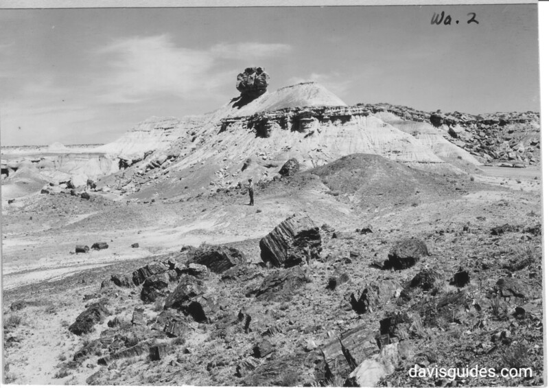 "The ""Sphinx"" in Rainbow Forest near west entrance. Petrified Forest National Park, 1929."