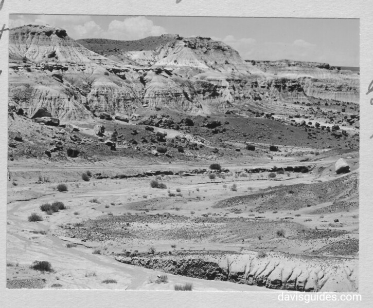 Part of the main area of the First Forest. The road leads to the northeast entrance. Petrified Forest National Park, 1929.