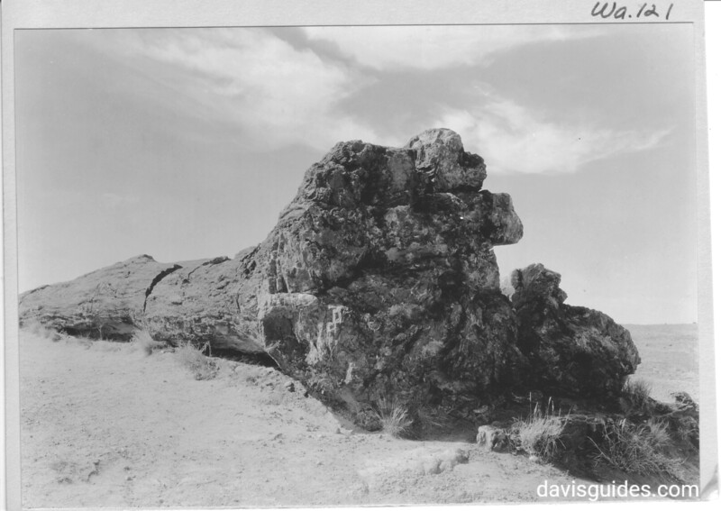 Petrified log near headquarters showing largest root system found thus far in the area. Petrified Forest National Park, 1934.