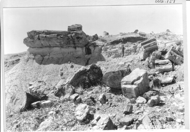 Exposed petrified logs in Rainbow Forest. Petrified Forest National Park, 1934.