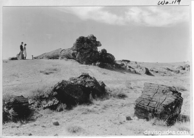 Visitors viewing the large petrified tree in Rainbow Forest. Petrified Forest National Park, 1929.