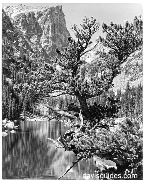 Lakeside view of mountains and trees beneath Hallett Peak. Rocky Mountain National Park, 1938.
