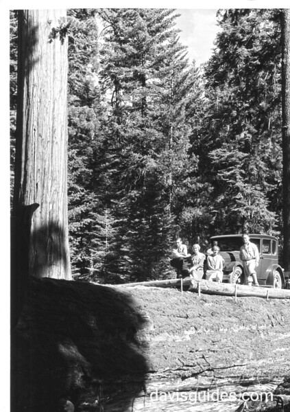 Automobile and passengers on downed tree trunk, Sequoia National Park, 1929.