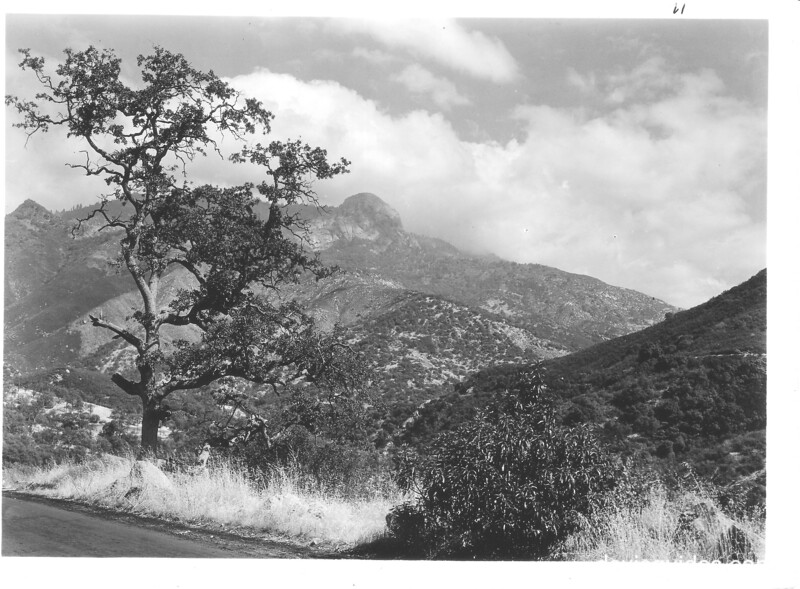 View east from road near Ash Mountain showing live oak, Morro Rock, and the Giant Forest Plateau. Sequoia and Kings Canyon National Parks, 1929.