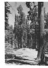 Campground sites in Redwood Canyon. Sequoia and Kings Canyon National Parks, 1940.