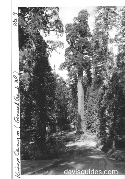 The California Tree, General Grant National Park (now Sequoia and Kings Canyon National Parks), 1936.