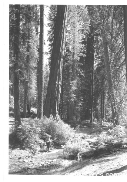 Fisherman at bottom of Redwood Canyon. Sequoia and Kings Canyon National Parks, 1940.