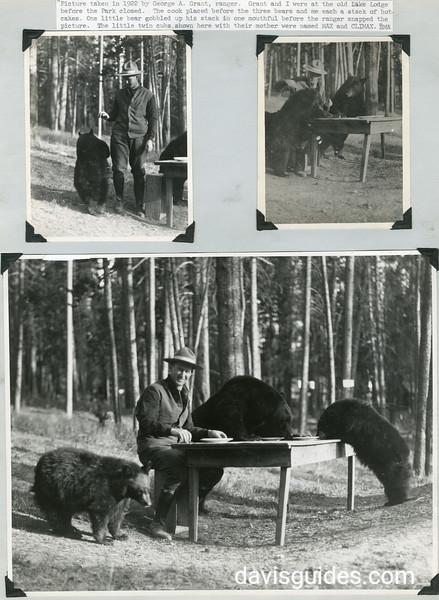YELL_Lake Lodge bear feeding_1922
