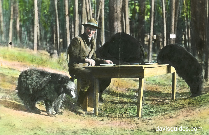 Park Superintendent Horace Albright feeding pancakes to bears. Yellowstone National Park, 1922.