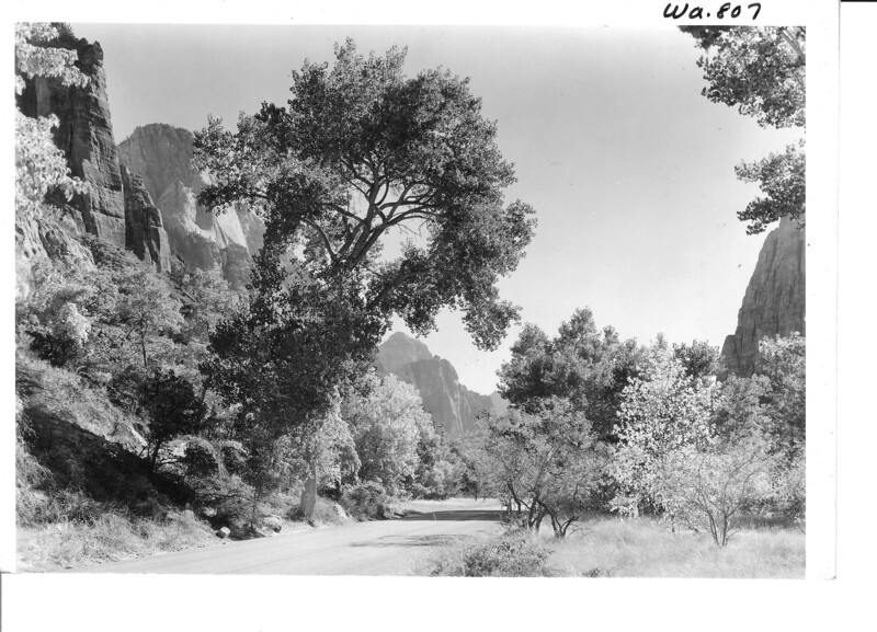 View down Zion Canyon from above the lodge. Mountain of the Sun at left of cottonwood trees. Zion National Park, 1935.