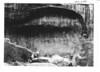 View of Zion Stadium showing successive arches. Zion National Park, 1929.