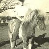 Robert and his Arizona pony (Scottsdale,1959)