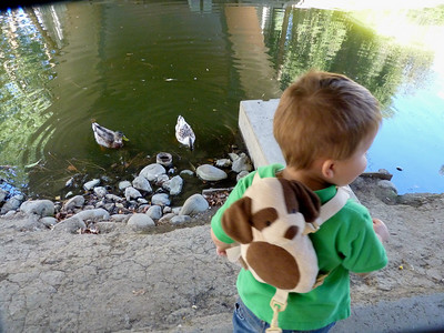 Joey feeding the ducks in the UC Davis Arboretum