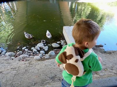 Joey feeding the ducks in the UC Davis Arboretum