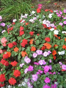 Bright flowers in Uncle Len's yard.