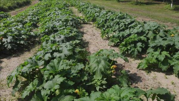 8/10/2021 Garden in Thomaston
