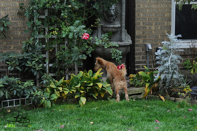 Libbi stops to smell the roses.  11/6/11
