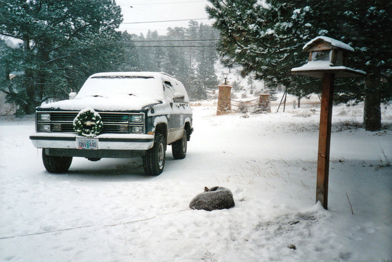 NAPPIN' IN THE SNOW
