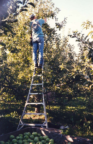 FOOL<br /> Even though this is a 10-foot ladder (the tallest one available), you still should never stand on the uppermost rungs, even if you need the apples. I did this once and leaned back instead of resetting my ladder and the thing collapsed on me, sending me eight feet to the ground flat on my back. My head missed the bin by mere inches.