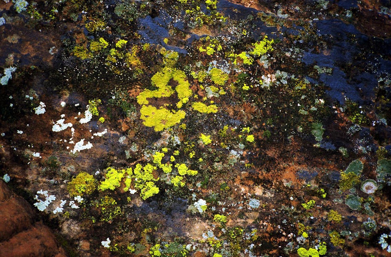 LICHENS<br /> The profusion of colors and textures was too much to pass up.