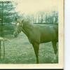 Secretariat. Triple Crown Winner. At stud in Lexington Ky. 1974.