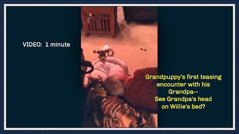VIDEO:  A puppy's first meeting with his Grandpa