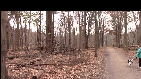 Video: 6 mins -- A Fall Walk in the Woods with Willie & Alfie, 11-21-2019