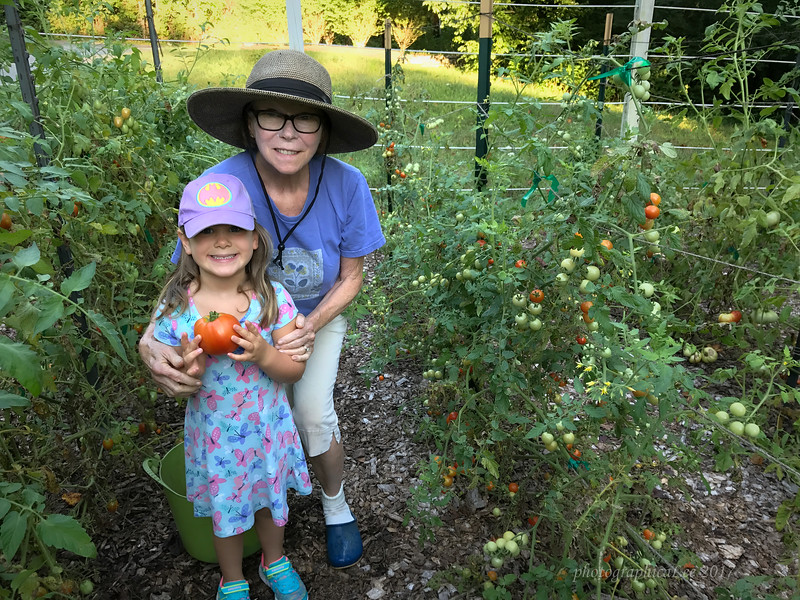 London helps pick tomatoes