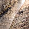 045 - Longfork Farms  2018 -