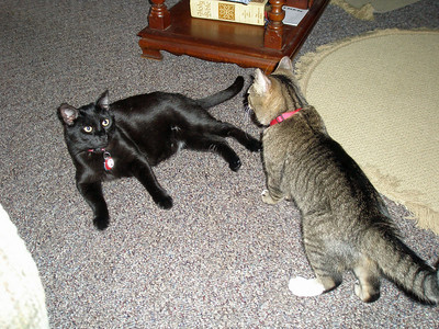 Indy and Bacca