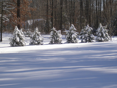Lori and Tex Snow 01:2010 012