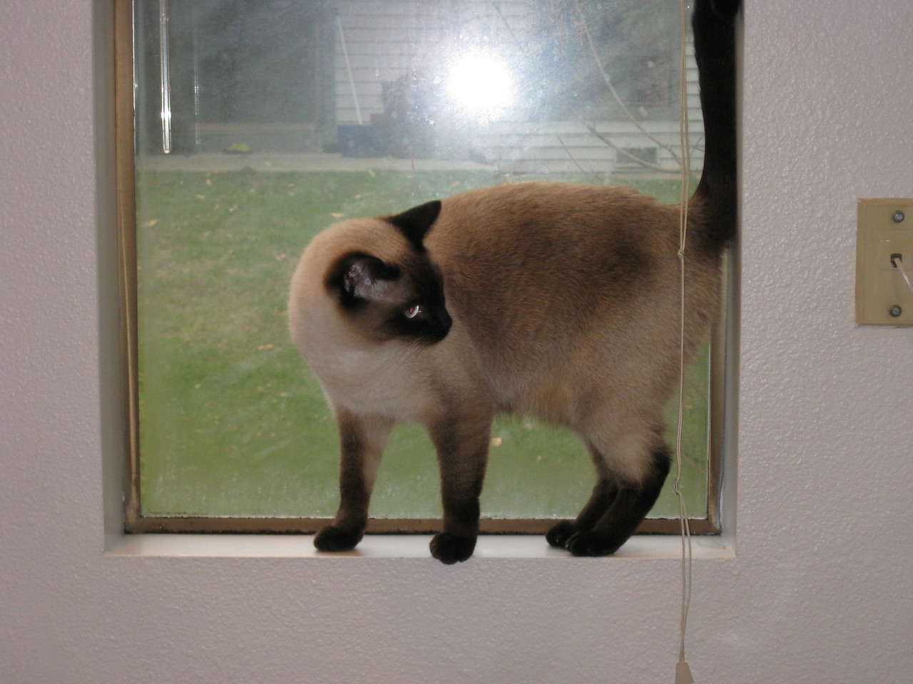 Kitchen windows rule