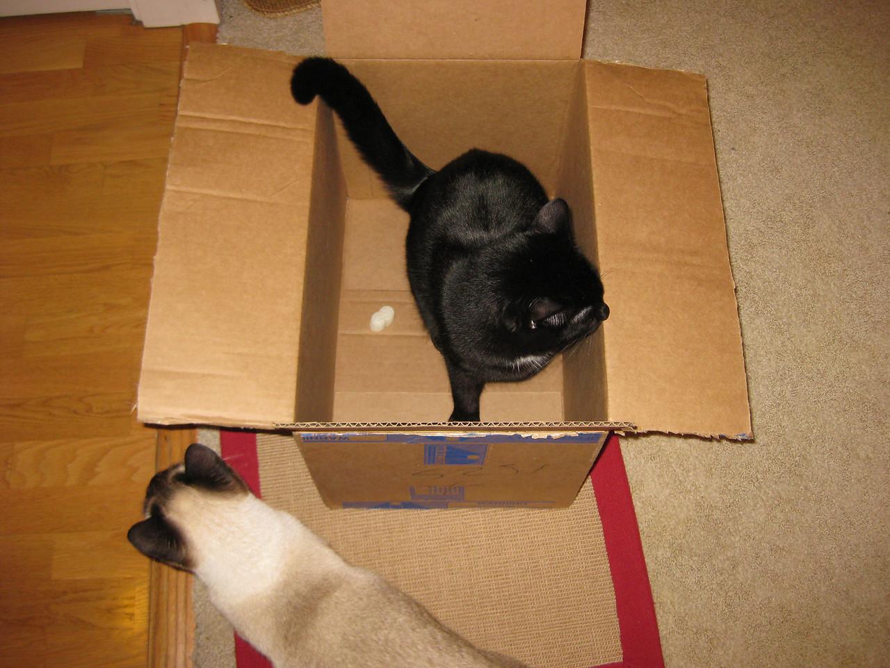 Boxes, shiny boxes